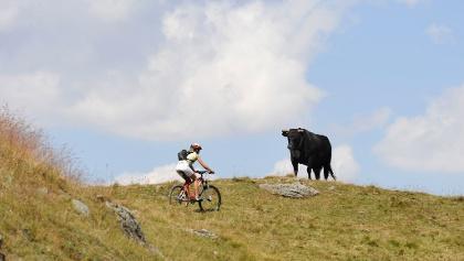 Biker mit Kuh