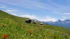 Escursione estiva: Lungiarü - Val di Murins - Rifugio Genova - Sasso Putia