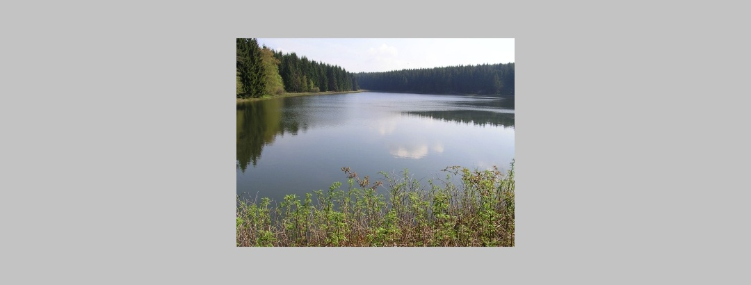 Nasswieser Teich