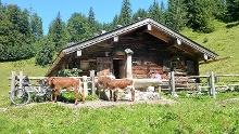 Sonntagshorn - Umrundung über die Winkelmoosalm in den Chiemgauer Alpen