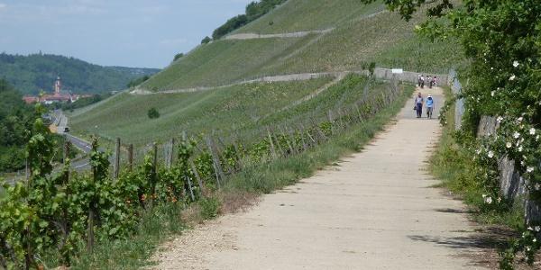 Panoramaweg in den Weinbergen vor Sommerhausen