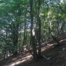 Schattige Wälder