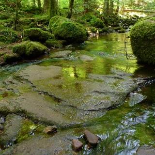 Bemooste Steine im Monbachtal