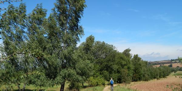 auf dem alten Kolnnenweg zur Sielmann Stiftung