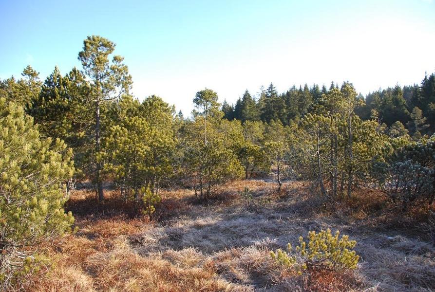 """Dachsberg: """"Rund um das Horbacher Moor""""  (Naturlehrpfad)"""