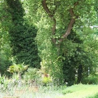 Allergologische Gärten