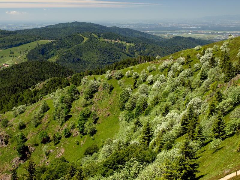 Große Münstertal-Umrundung