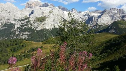 The Brenta Dolomites from Doss del Sabion