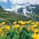Hollersbach-Wald-Wiese-Bach-Erlebniswanderung