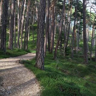 Laranza/Laranz forest
