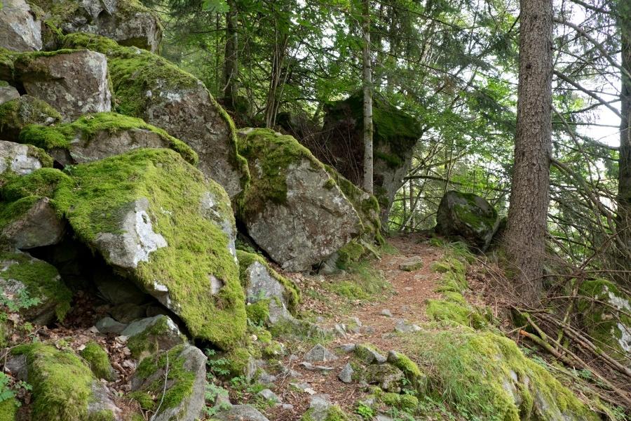 Albsteig Schwarzwald: Rückführung von St. Blasien über den Wolfssteig nach Albbruck