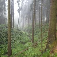 oberes Silberbachtal