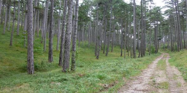 Forststrasse nach Kleinfeld