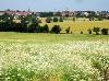 Blick nach Ilshofen  - @ Autor: Heinz Obinger  - © Quelle: Hohenlohe + Schwäbisch Hall Tourismus e.V.