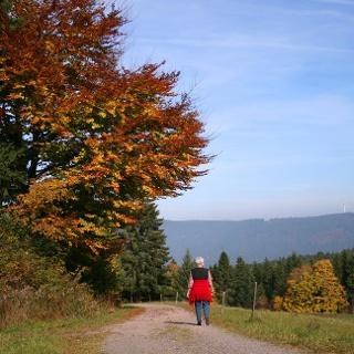 Auf dem Heilklima-Wanderweg 2