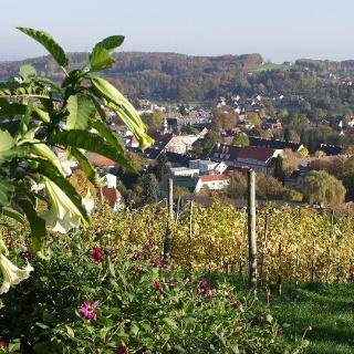Weinberg mit Blick auf Deutschlandsberg