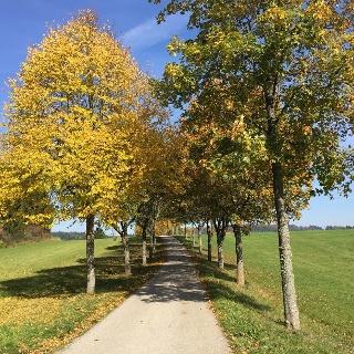 Marbacher Allee