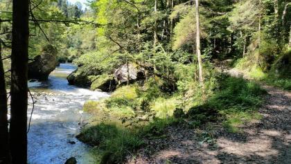 Sihl vor Sihlbrugg am rechten Flussufer