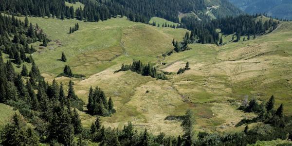 Almwiesen-Strukturen beim Abstieg vom Hochstein
