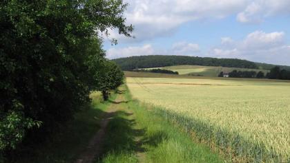 Wanderweg Limberg 2