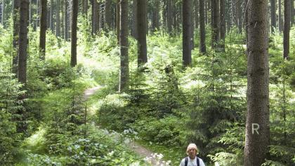 Waldetappe zwischen Steinbach am Wald und Brennersgrün.