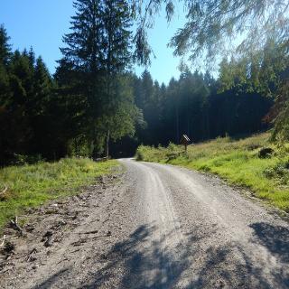 Aufstiegsweg über breite Forststraße