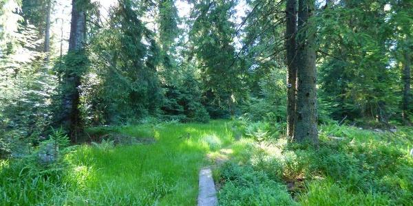 Grenzweg zwischen Buchwaldhöhe und Spindelhau