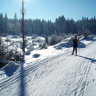 Langlaufen Gutenbrunn