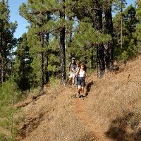 Durch den Pinienwald, kurz vor den Coladas des San Juan.