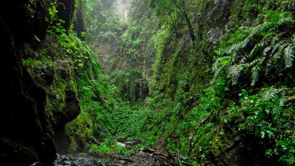Dschungelatmosphäre auf dem Weg nach Los Tilos.