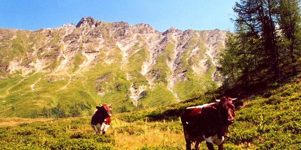 Kühe auf der Glettenalm