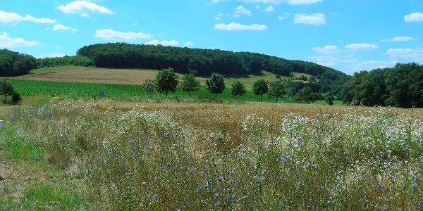 Die weitläufige Felder- und Wiesenlandschaft bei Würzweiler.