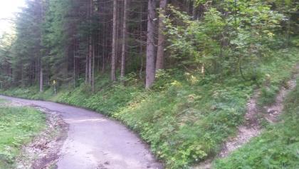 Bild 1: Blick zurück zum Wegschild und abzweigender Pfad in den Wald
