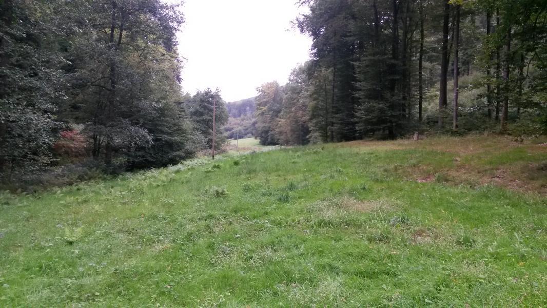 04.09.2016 Waldprechtstal/Untere Vorbergzone