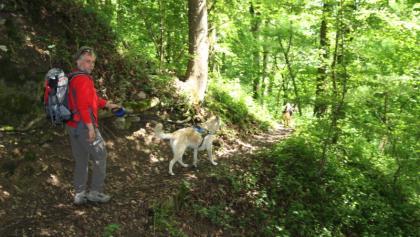 Niemals ohne Hund: Guido Seyerle wandert oberhalb der Bühler entlang