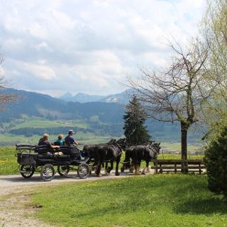 Kutschfahrt durch die Wertacher Landschaft