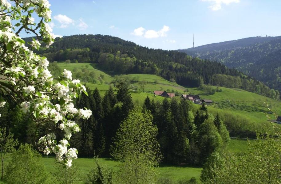 Seebach - Hornisgrinde-Panoramatour