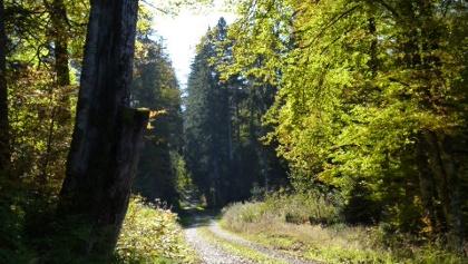 Herbstlicher Schwarzwald im Krumpendobel