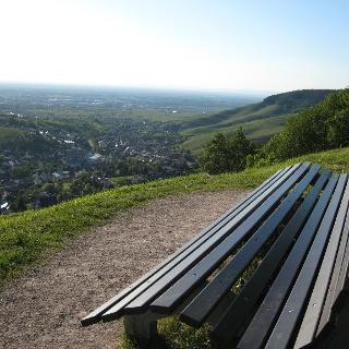 Blick in die Rheinebene