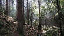 """Pilgerweg """"Werderscher Weg"""""""