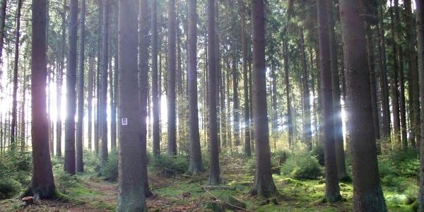 Pfad durch den Wald
