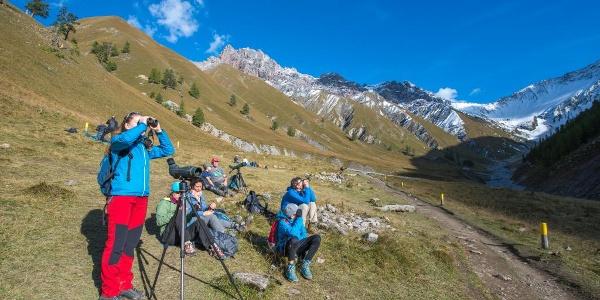 Beobachter der Hirschbrunft auf dem Rastplatz Val Mela in der Val Trupchun