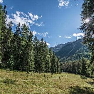 Die Lichtung von Margun Grimmels erinnert an die ehemalige Alp.