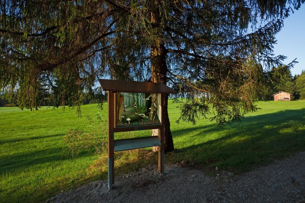 Schaukasten am Vogellehrpfad Bad Bayersoien (Roland E. Richter)