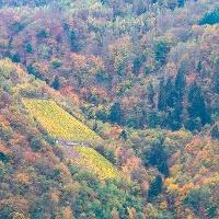Herbstliches Ambiente im Moselurlaub