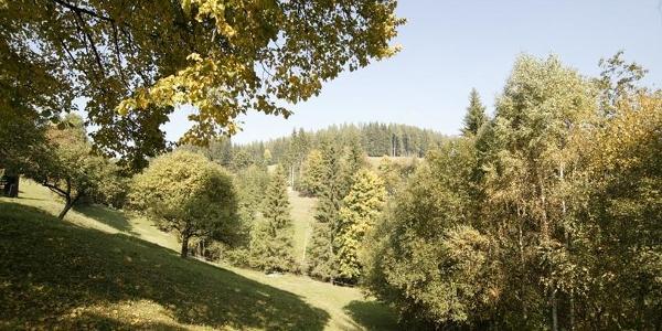 Fischbacher Naturlandschaft