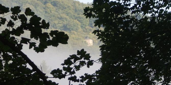 Durch das Blätterdach erhascht man einen kurzen Blick auf die Ruine Neuwolfstein.