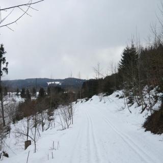 Am Waldrand beim Emerlander Weiher in der Eschachtalloipe (2)