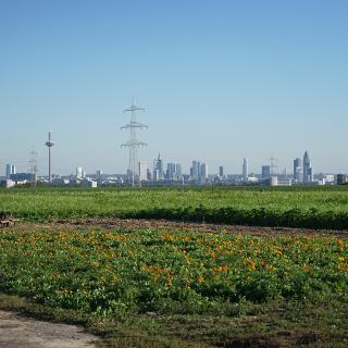 Blick von Steinbach auf die Frankfurter Skyline