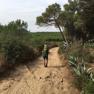 Pinienwald bei Begur